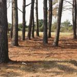 Bodie LH trees