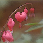 bleeding heart, lighter dry brush 1